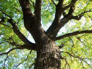 arbrebd